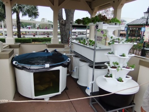 Aquaponics Display