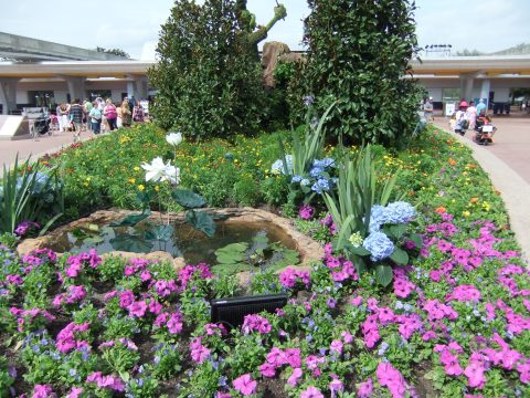 More glass flowers on the way out of Epcot
