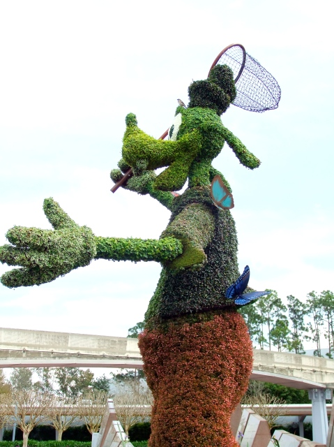 Goofy has his butterfly net out yet his quarry eludes him...