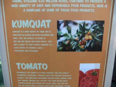 Kumquat info in the Florida Fresh area